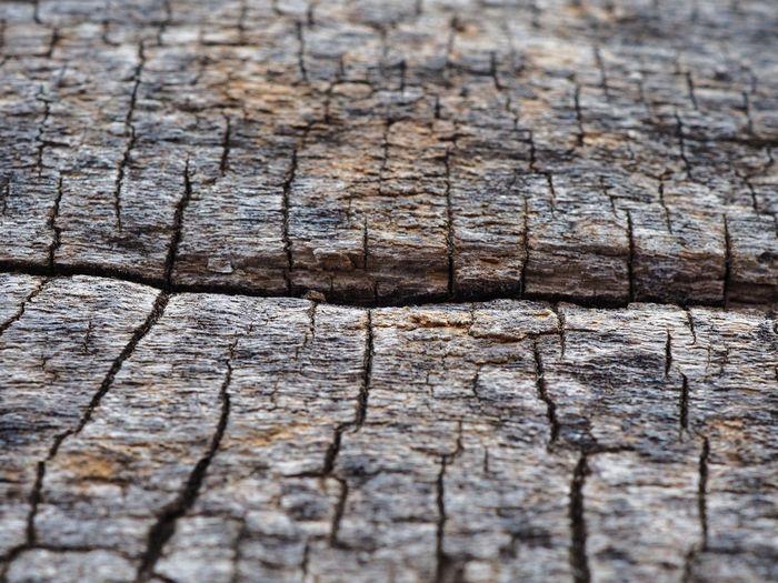 Full frame shot of weathered tree