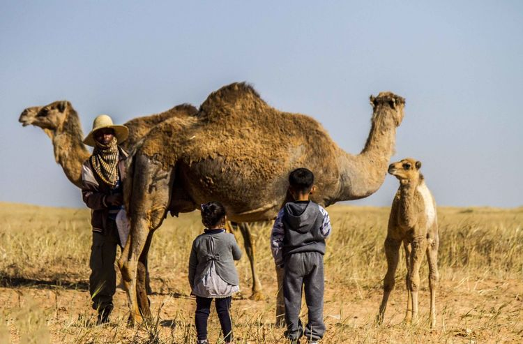 Camel Casual Clothing Clear Sky Day Field Hanging Out Happiness Kids Libya Lifestyles Misrata Nature Safari Animals