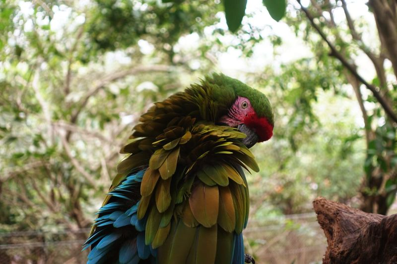 Parrot in the