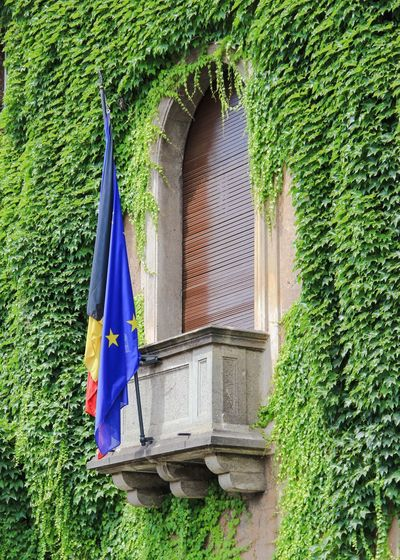Adapted To The City Outdoors No People Window Tree Building Exterior Flag Day Built Structure Plant Patriotism Green Color Architecture Nature Embassy German Embassy Blinds Closed Blinds Ivy Ivy Covered Ivy Wall Building Exteriors Help Diplomatic Miles Away