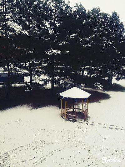 Nurture  First Snow