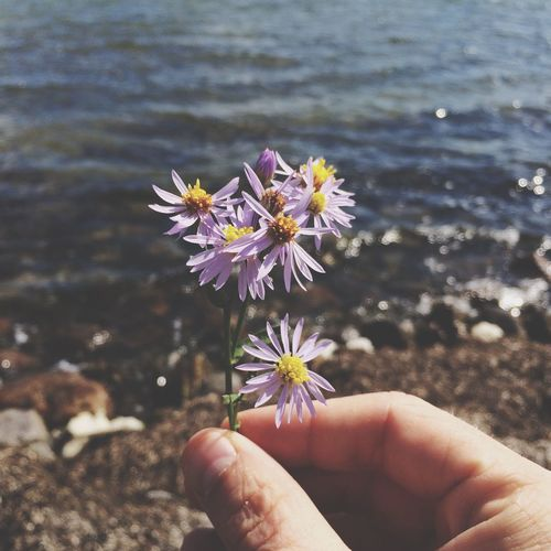 Cropped Image Of Person Holding Purple Flowers Against Lake