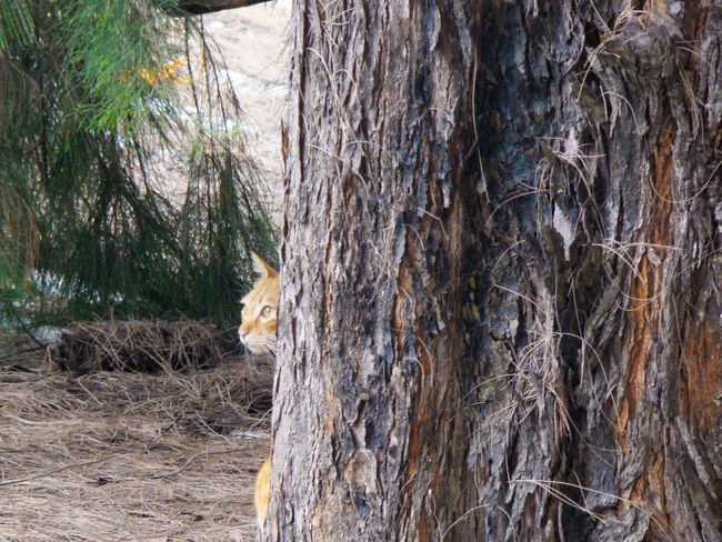 Cat Pets Animals Profile Looking To The Other Side Trees Nature Thoughts Gaze