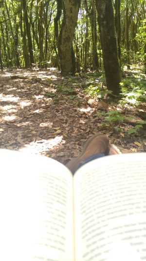 Book Boots Day Forest Nature No People Outdoors Sunlight