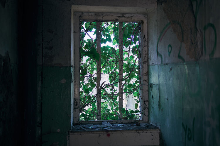 forgotten place Room Ivy Leaf Broken Glass Atmospheric Mood Atmosphere Light And Shadow darkness and light Lucky's Colors Plant Tranquility Tranquil Scene Scenics Sunlight Melancholy Sadness Nature Abandoned Lostplaces Abandoned Places Graffiti Urbex House Window Indoors  Built Structure Architecture Close-up