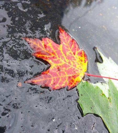 Water Heat -