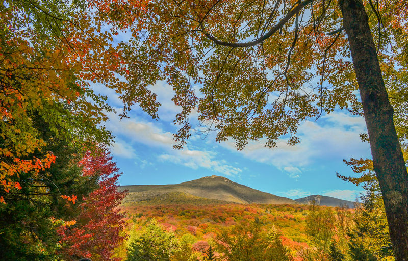 Fall Colors New Hampshire, USA Autumn Beauty In Nature Branch Change Day Fall Fall Leaves Flume Gorge Growth Landscape Leaf Mountain Nature No People Outdoors Scenics Sky Tranquil Scene Tranquility Tree